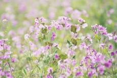 flower782-2