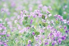 flower782