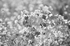 flower782-3
