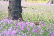 flower783