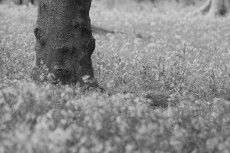 flower783-3