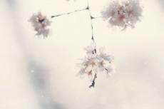 flower786-2
