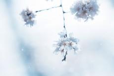 flower786