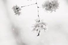 flower786-3