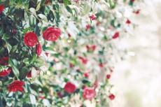 flower792