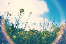 flower793