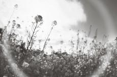 flower793-3
