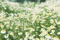 flower795-2