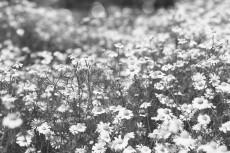 flower795-3