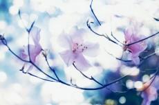 flower798-2