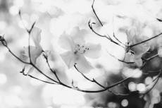 flower798-3
