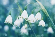 flower799-2