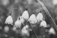 flower799-3