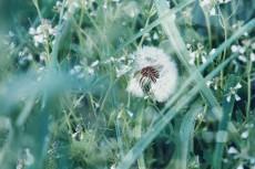 flower800