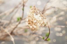flower801-2