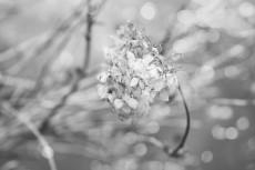 flower801-3