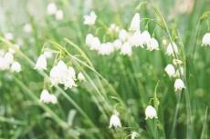 flower802-2