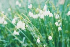 flower802