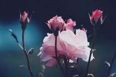 flower804-2