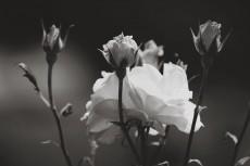 flower804-3