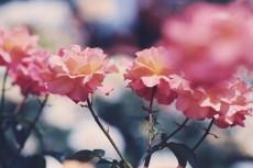 flower805-2