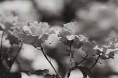 flower805-3