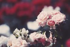 flower806-2