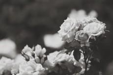 flower806-3