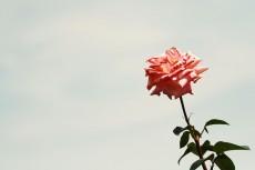 flower807-2