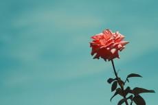 flower807