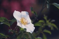 flower808-2