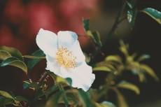 flower808