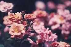 flower809-2