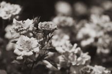 flower809-3