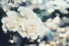 flower810-2
