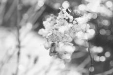 flower803-3