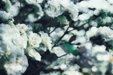 flower811-2