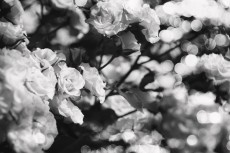 flower811-3