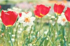 flower812-2