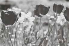flower812-3