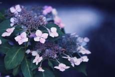 flower813-2