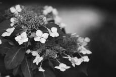 flower813-3