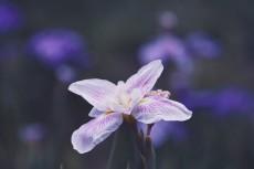 flower814-2