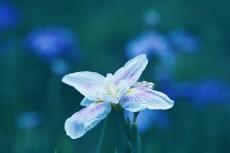 flower814