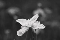 flower814-3