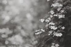 flower815-3