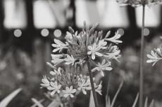 flower816-2