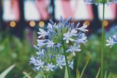 flower816
