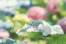 flower817-2