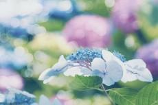 flower817